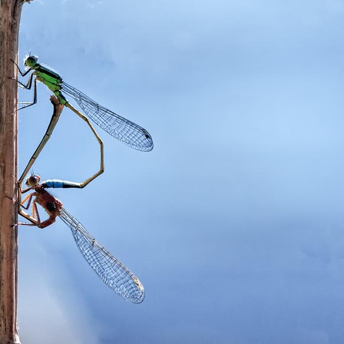 ArtistNamedBec   Nature Photography